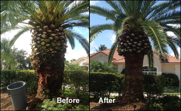 Palm tree before and after