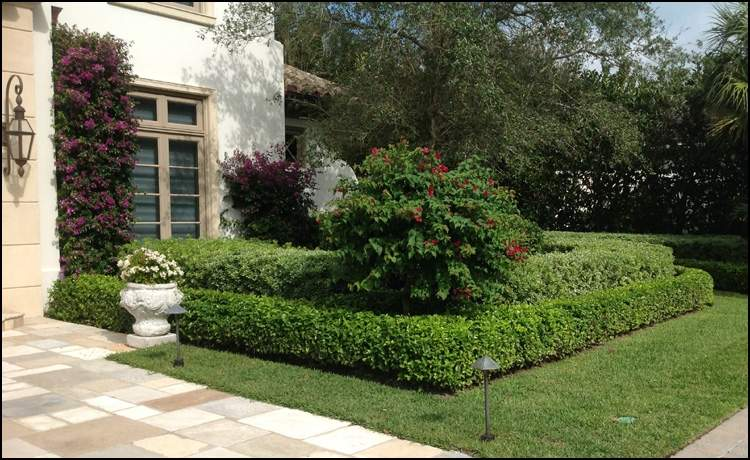 Neatly trimmed front lawn with hedged bushes