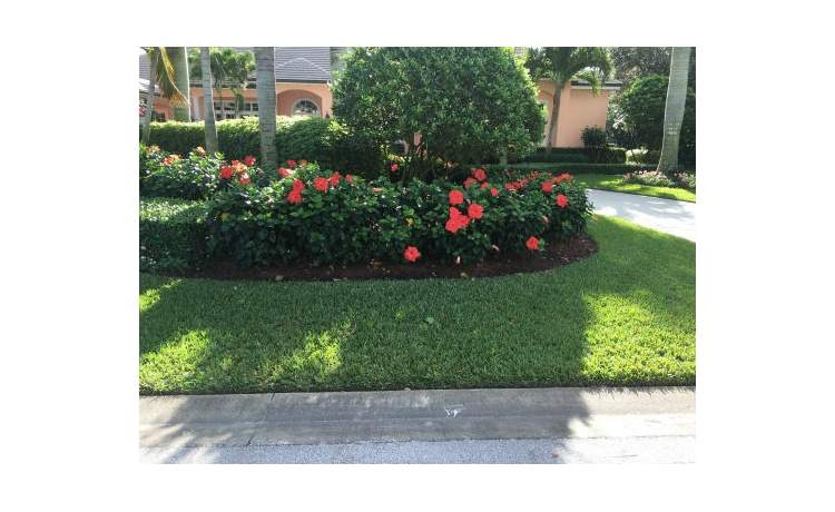 Hibiscus flowers in front of tree